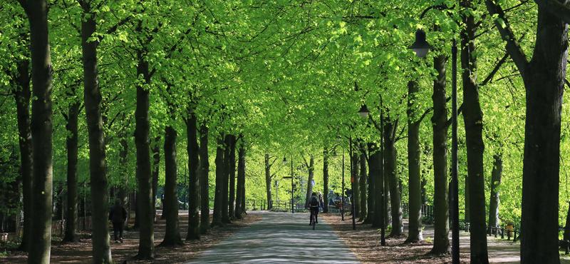 CityGames Münster: Promenade in Münster